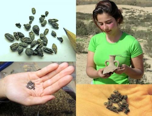 זרעים בני 1500 שנה
